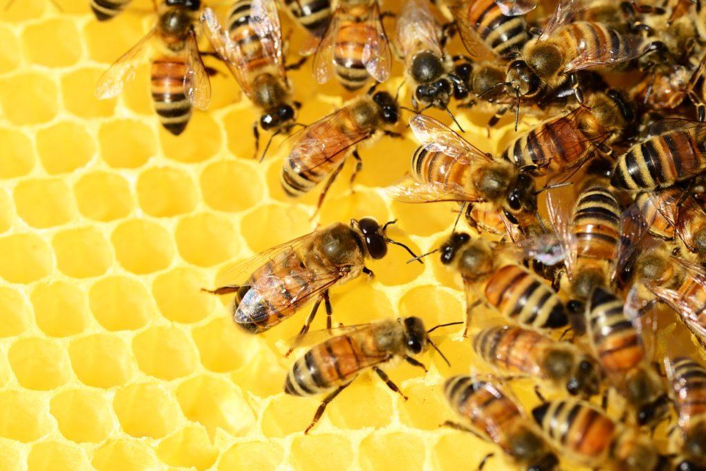как узнать настоящий мед