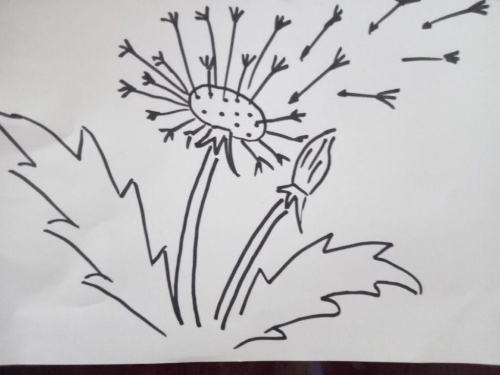 Как нарисовать одуванчик карандашом поэтапно?