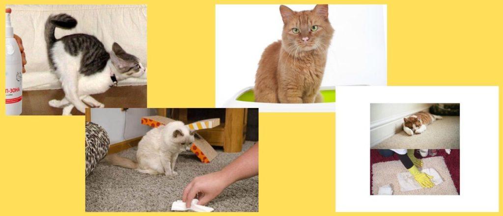 как избавиться от кошачьей мочи на разных поверхностях