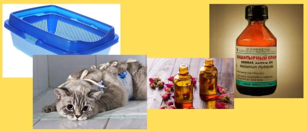 рекомендации по избавлению неприятного запаха мочи