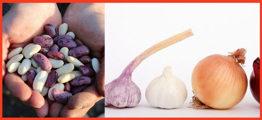 лук, чеснок, фасоль